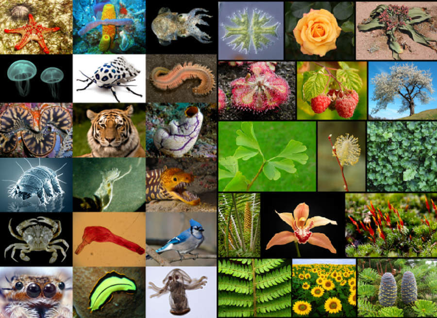 Earth-is-home-to-8.7-million-species.jpg